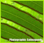 Logo for Photographic Salmagundi web site by Jessica Winder - P1140305SalmagundiLogoc