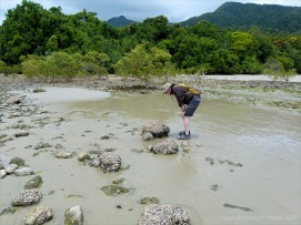 Context shot for Cape Tribulation oyster photos