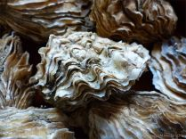 Molluscs in Archaeology Methods Approaches and